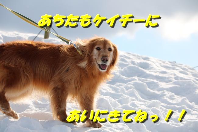 雪遊び2016 073