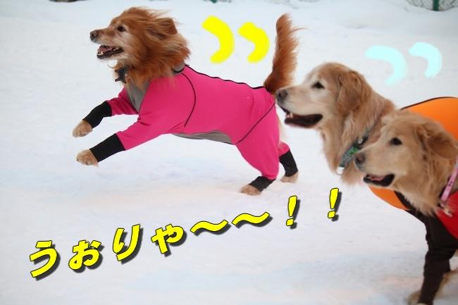 雪遊び2016 313