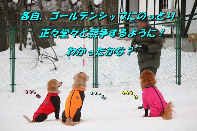 雪遊び2016 503