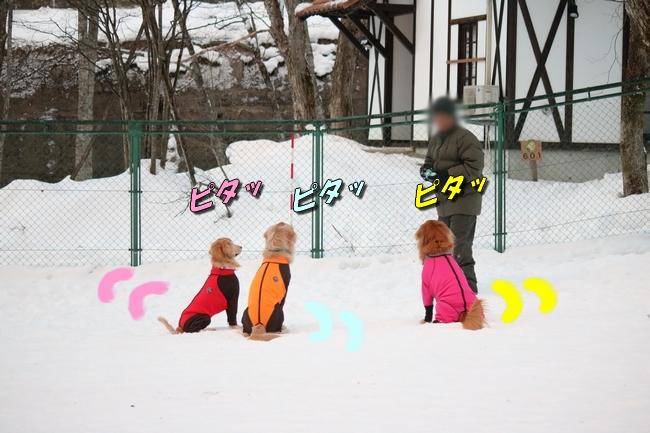 雪遊び2016 505