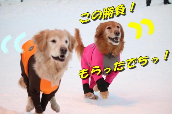 雪遊び2016 515
