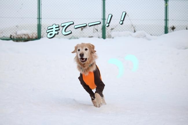 雪遊び2016 276