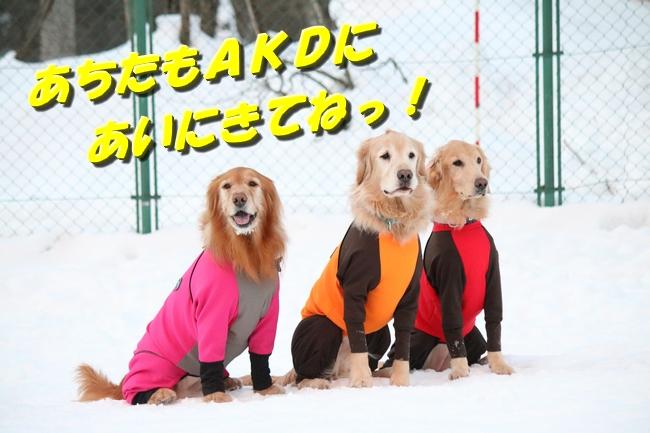 雪遊び2016 527