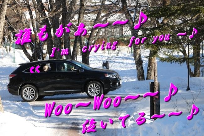 雪遊び2016 908