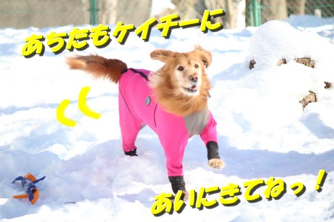 雪遊び2016 1006