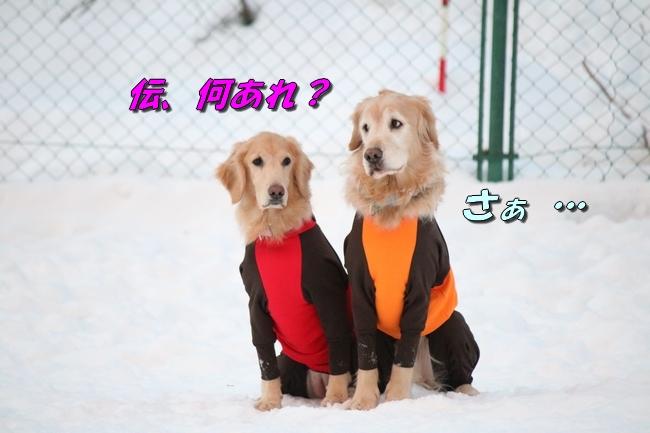 雪遊び2016 525