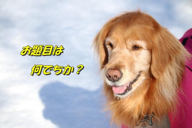 雪遊び2016 986