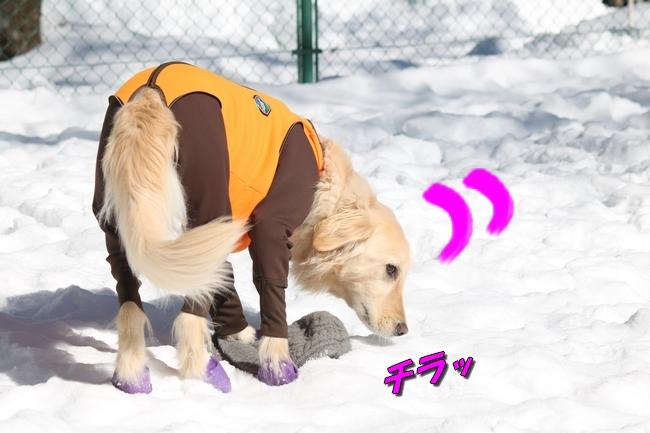 雪遊び2016 1030