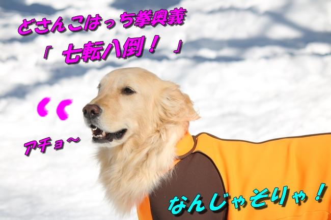 雪遊び2016 1602