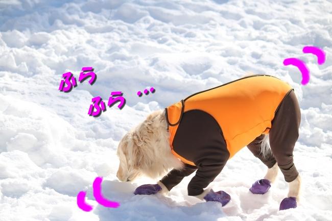 雪遊び2016 1149