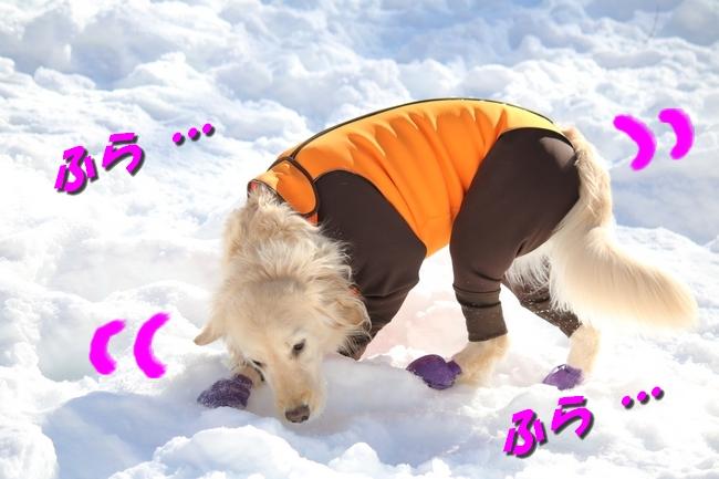 雪遊び2016 1150