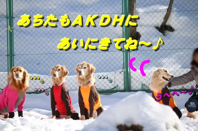 雪遊び2016 1124