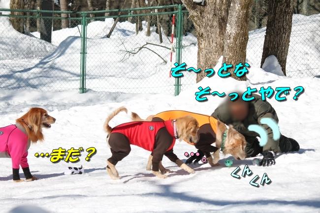 雪遊び2016 1207