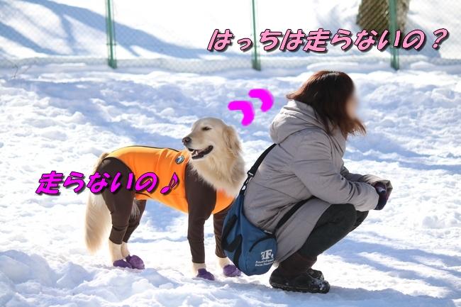 雪遊び2016 1216