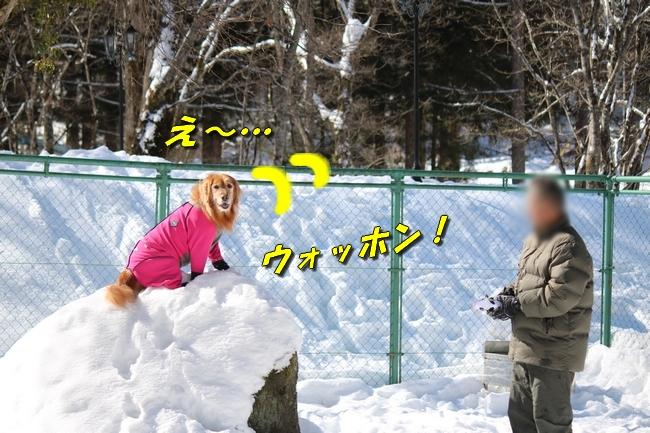 雪遊び2016 1277
