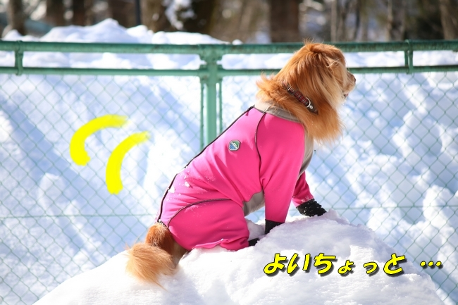 雪遊び2016 1278