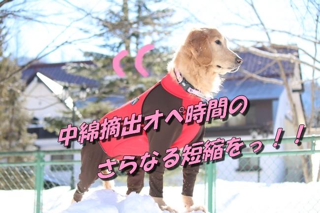 雪遊び2016 1364