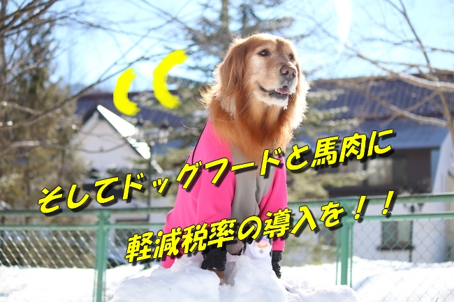 雪遊び2016 1394
