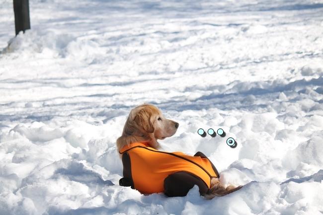 雪遊び2016 1410