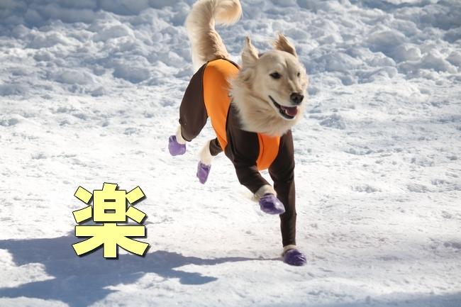 雪遊び2016 1095