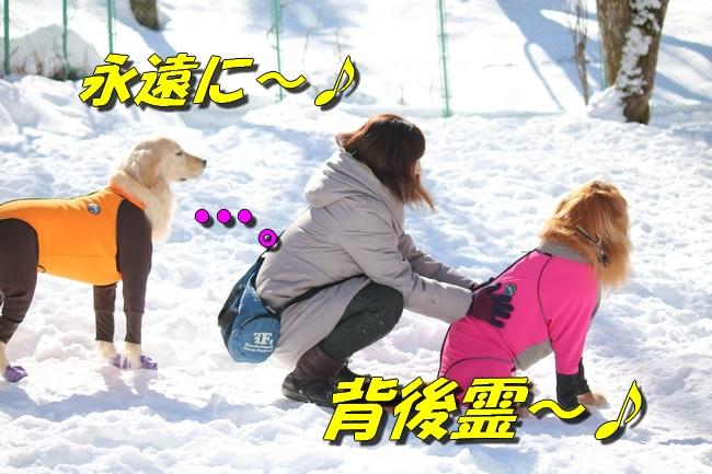 雪遊び2016 1182