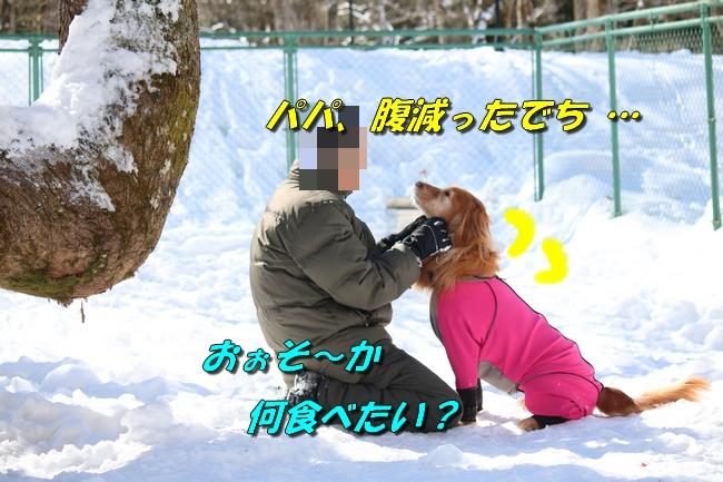 雪遊び2016 1511