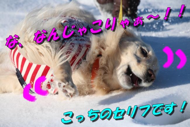 雪遊び2016 1987