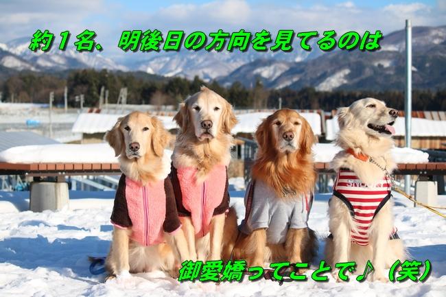 雪遊び2016 2015