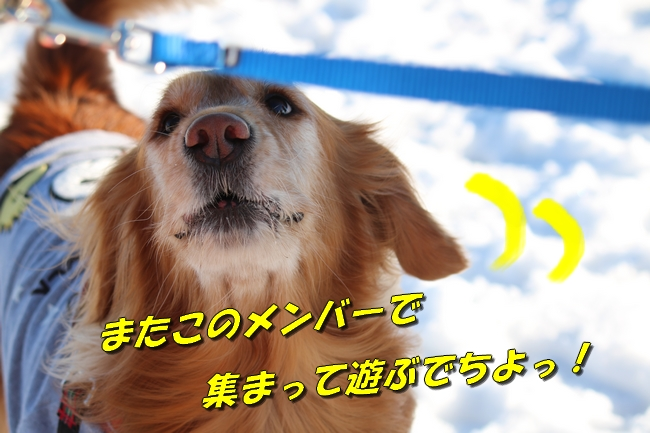 雪遊び2016 2043