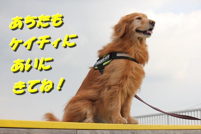 大蔵海岸 086