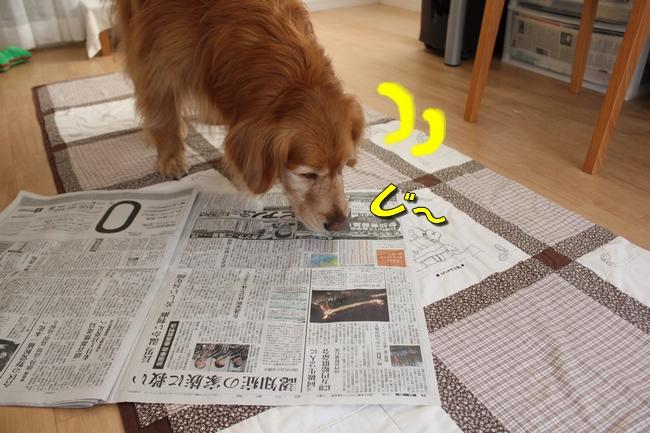 新聞天気聖子 082