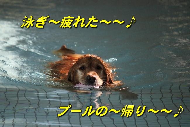 プール&旭化成謝罪 088