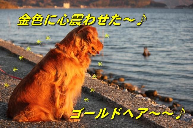 浜名湖 Dec 2011 003