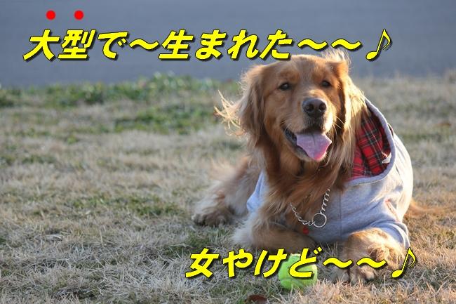 浜名湖 Dec 2011 577