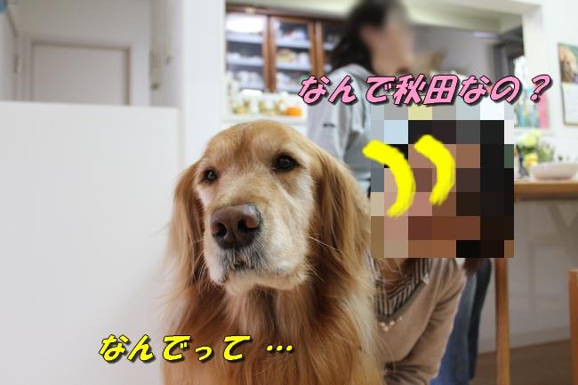 バーくん家 081