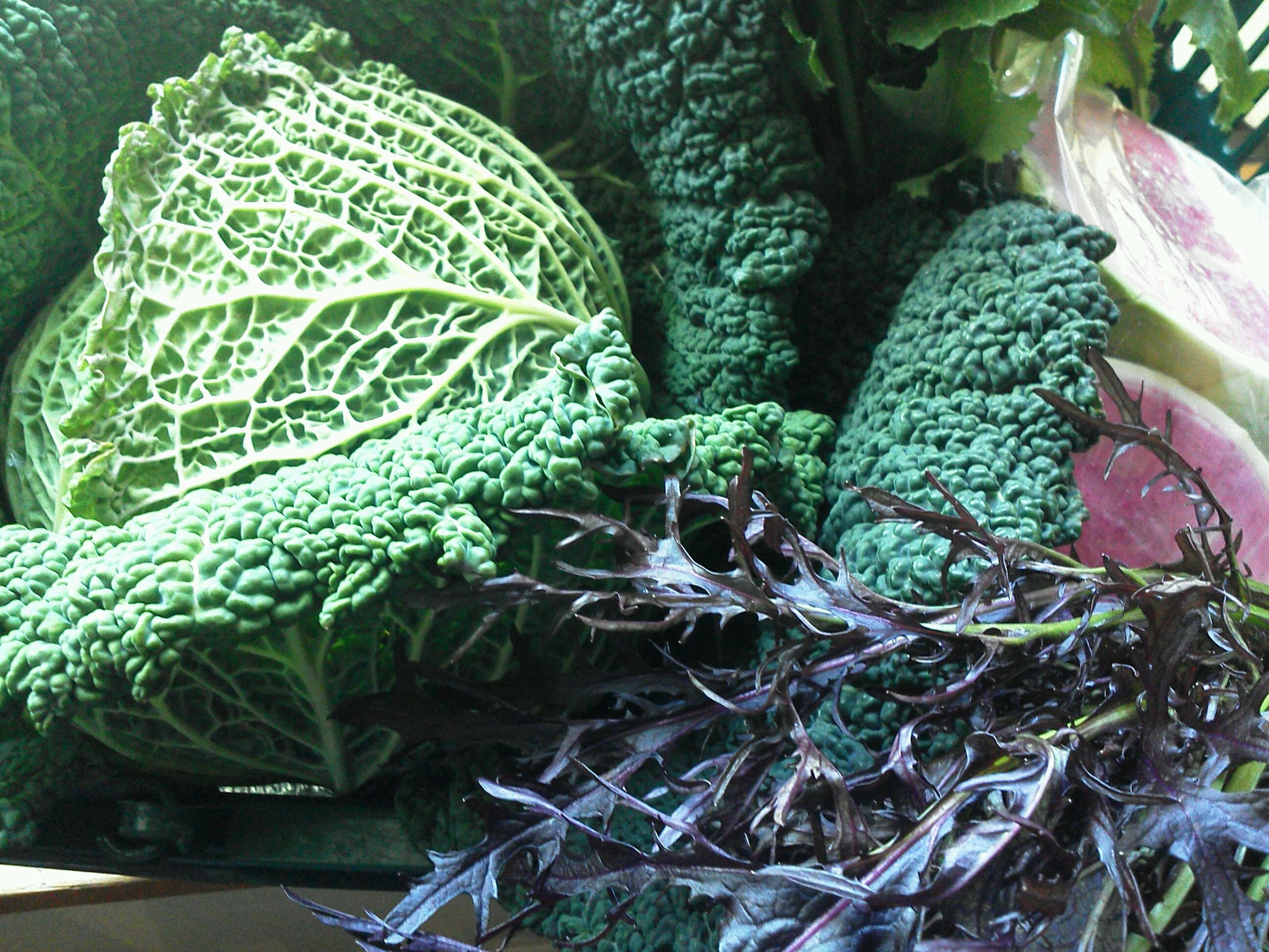 飯島野菜1224