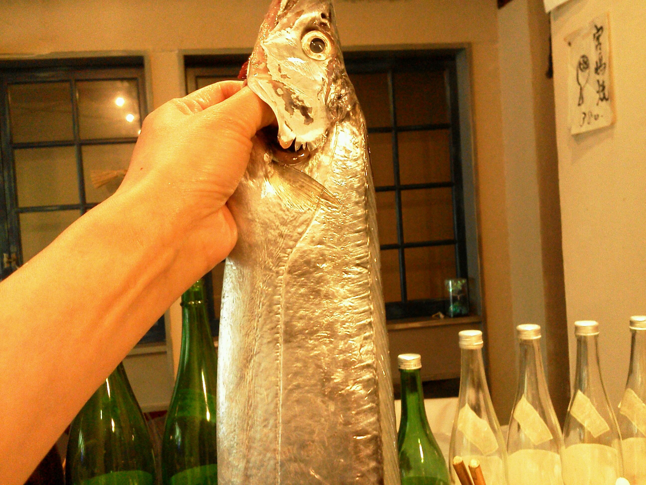 太刀魚20160108