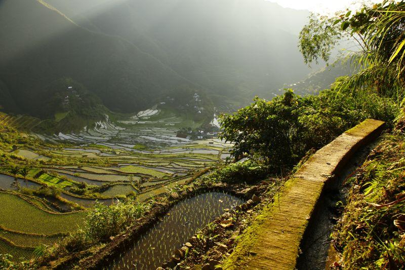 バタッド村の棚田 Batad rice terrace