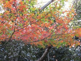 須磨離宮公園 紅葉2