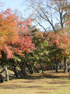 奈良 紅葉1