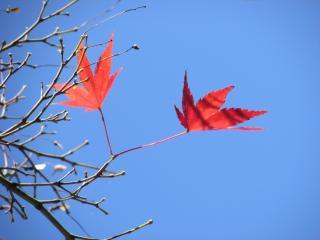 奈良 紅葉2