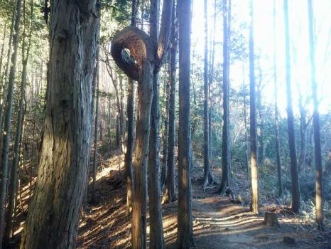 岩場に入る前の杉林