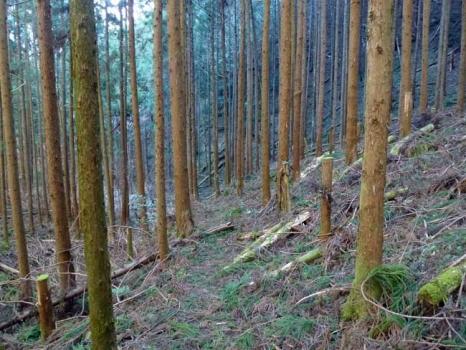 沢コースの林