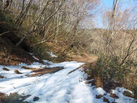 雪が残る柳沢林道