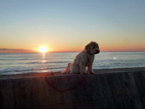 愛犬「マルピ」と日の出