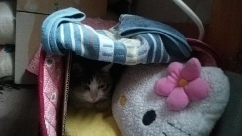 ベッドの中りく