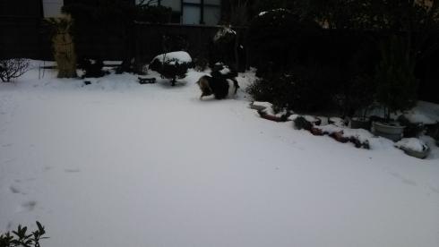 雪もんど1