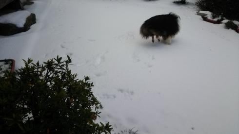 雪もんど3