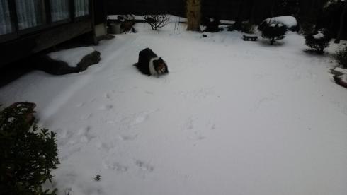 雪もんど2