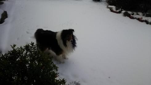 雪もんどおすまし